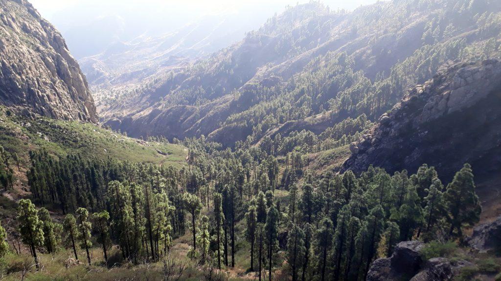 Wald beim Roque de Agando