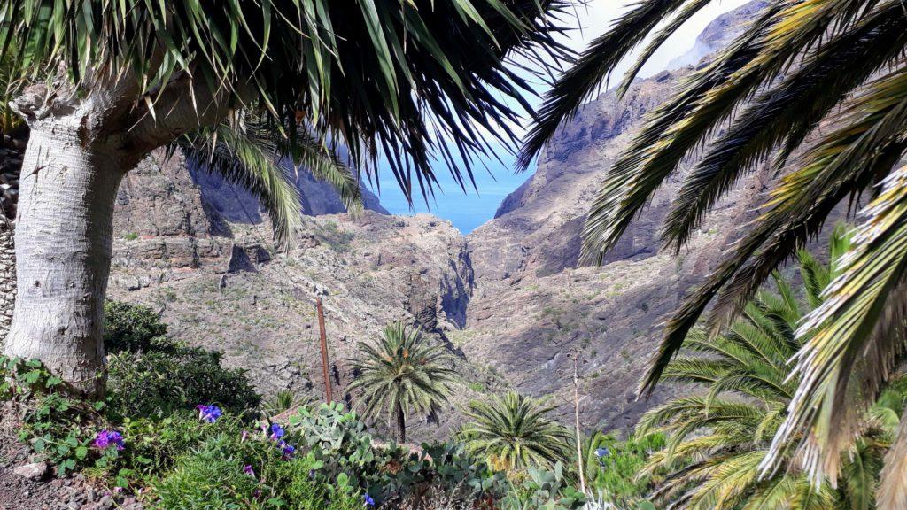 Die wohl bekannteste Schlucht Teneriffas: Masca-Schlucht im Teno-Gebirge