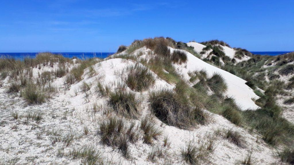 Sanddünen in der Bucht Cala Mesquida
