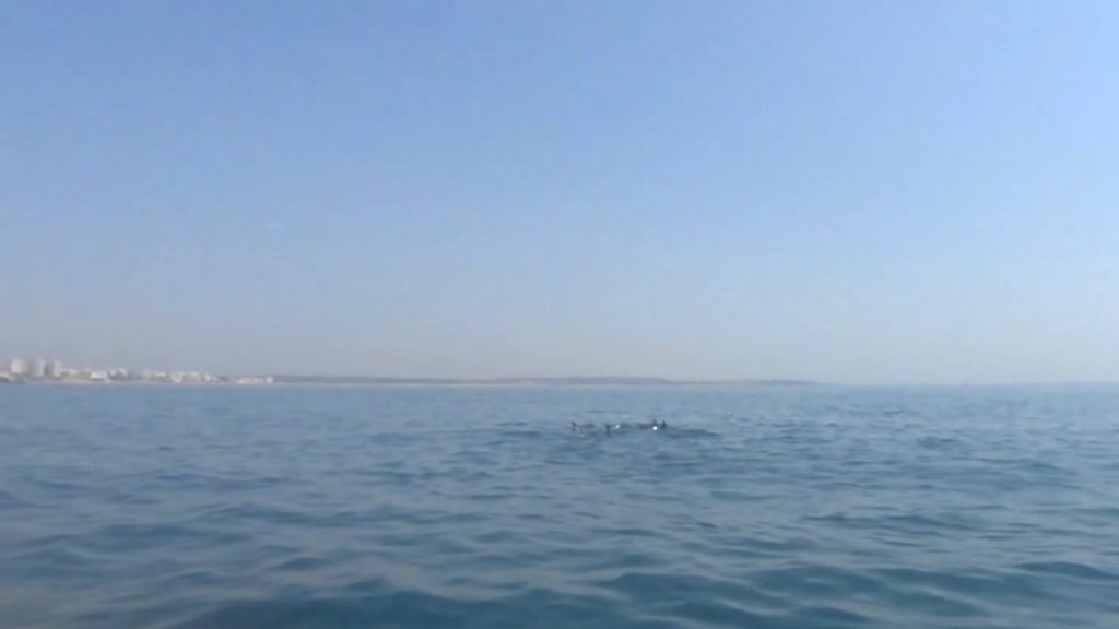 Watch dolphins
