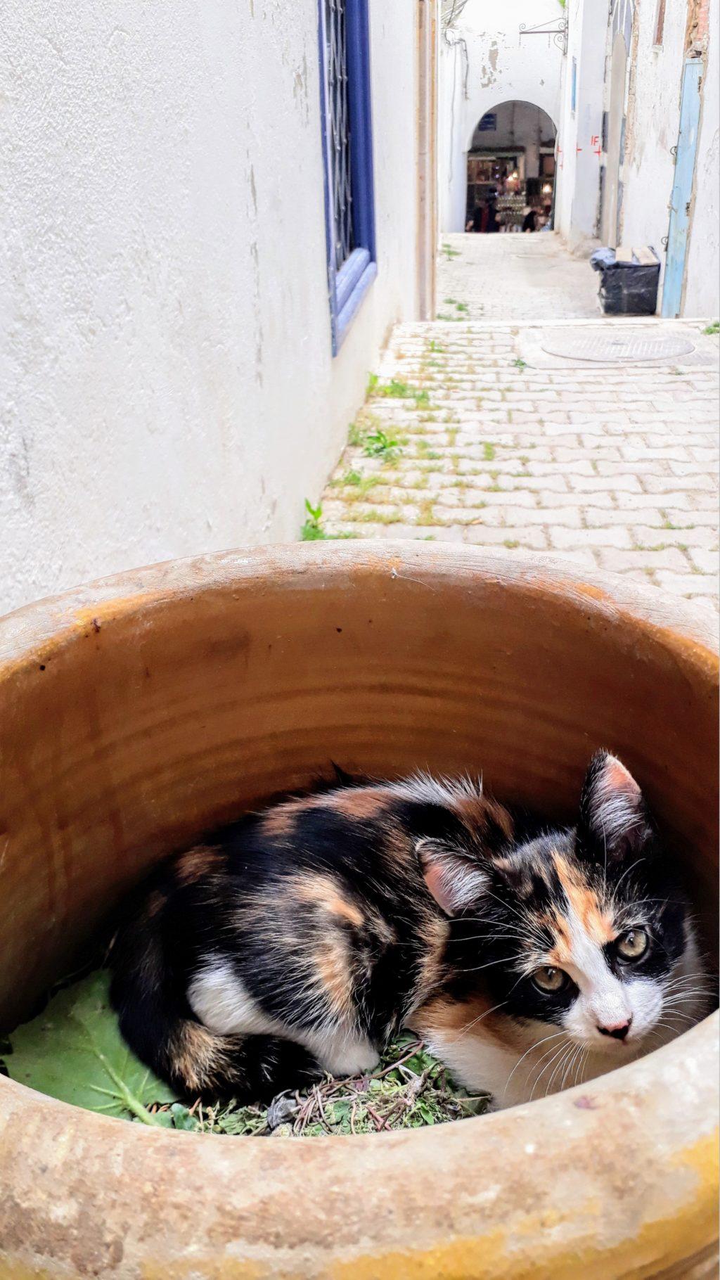 """Gato en la medina de Túnez: un poco de """"cat content"""" nunca hace daño... ;)"""