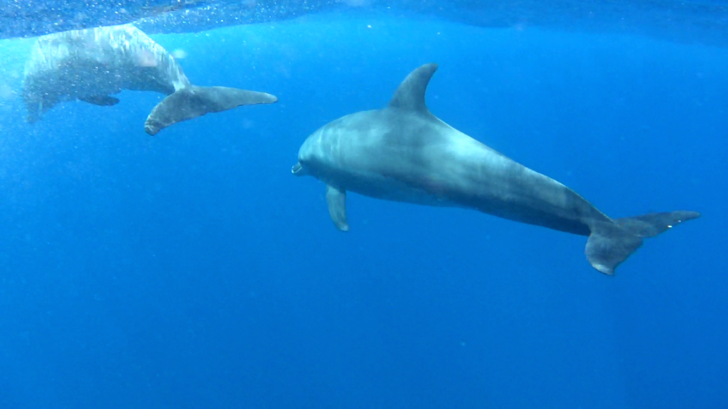 Delfines en su hábitat natural