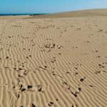 Fuerteventura: Dunas de Arena Infinitas